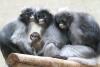 Neue Bewohner im Thüringer Zoopark Erfurt