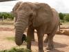 Welt-Elefantentag am 12. August 2016