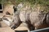World Rhino Day im Thüringer Zoopark Erfurt